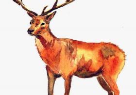 鹿的寓意有哪些 鹿的寓意是什么