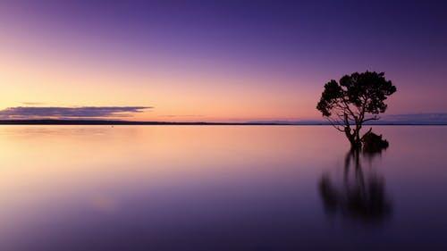 做梦有助维持心理平衡是什么道理?